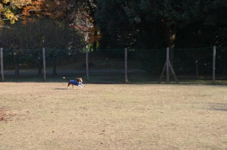 20121207柏の葉公園ドッグラン19