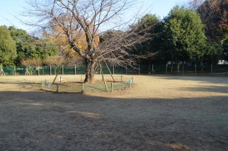20121207柏の葉公園ドッグラン26
