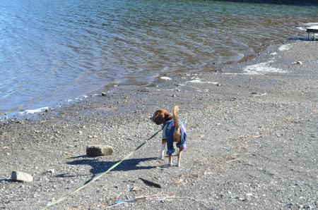 20121211精進湖06