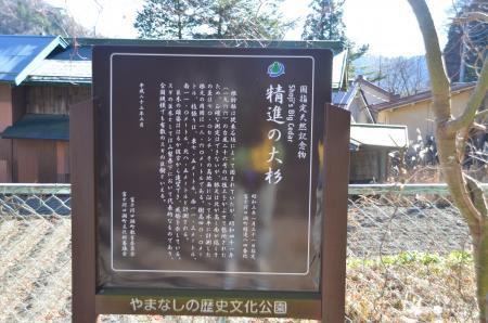 20121211精進の大杉05