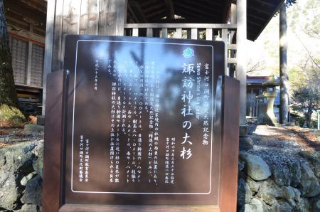 20121211精進の大杉01