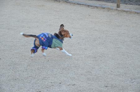 20121211道の駅富士吉田ドッグラン14