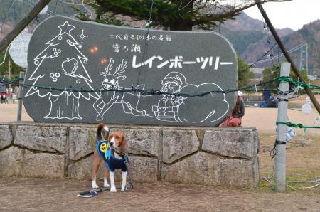 20121216宮ケ瀬湖イルミ15