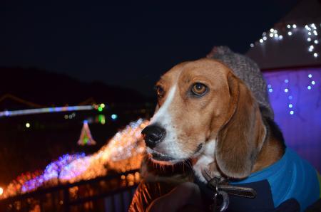 20121216宮ケ瀬湖イルミ22