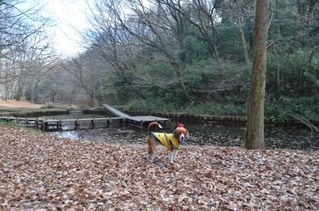 20121219小山田緑地22