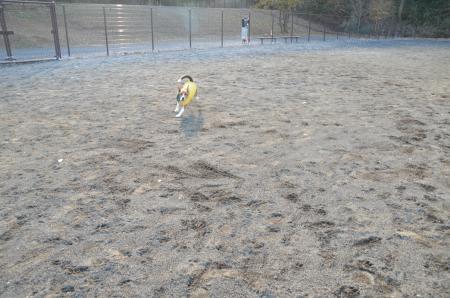 20121219七国公園ドッグラン05