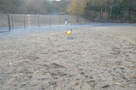 20121219七国公園ドッグラン04
