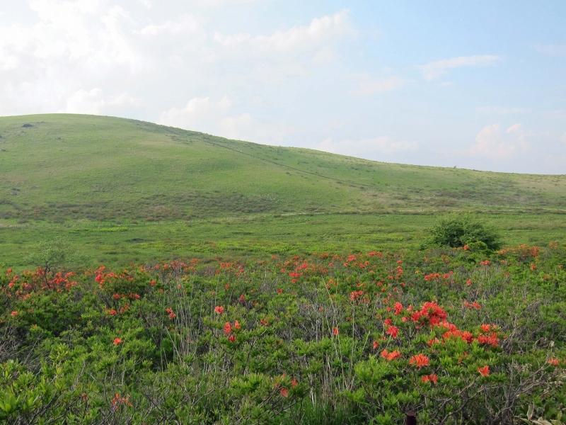 6月29日レンゲツツジが咲く車山湿原風景