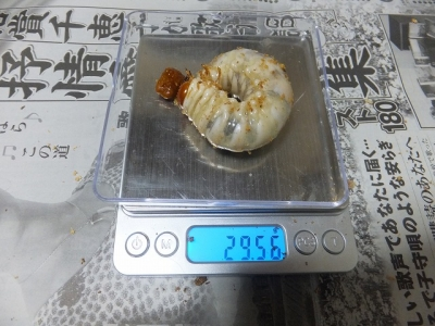 DSCF6522.jpg