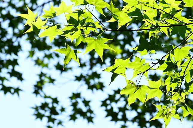 木洩れ日(2)