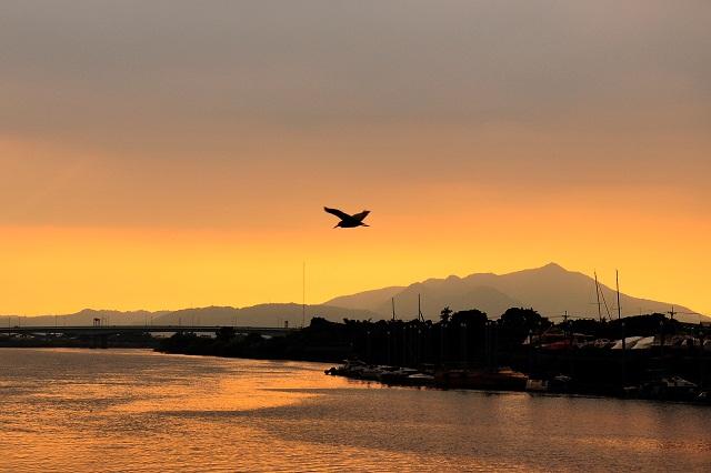 黄昏空を渡る鳥