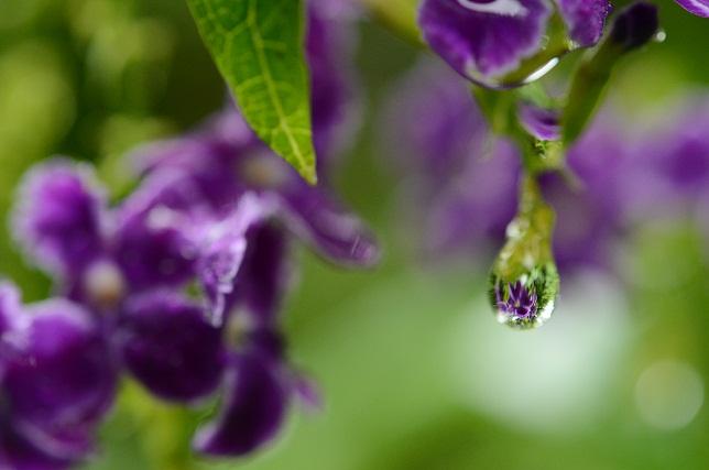雨の雫(1)