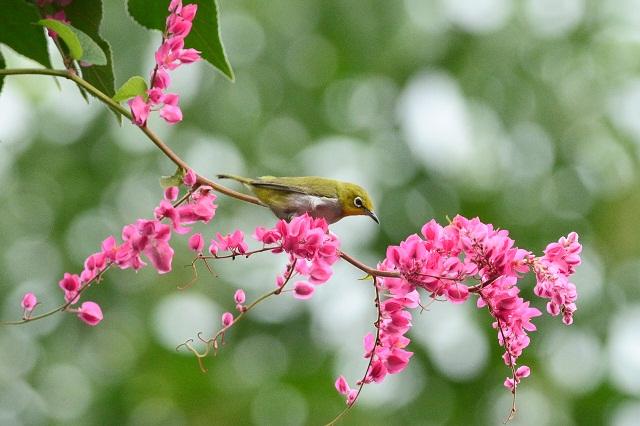 花とメジロ(1)