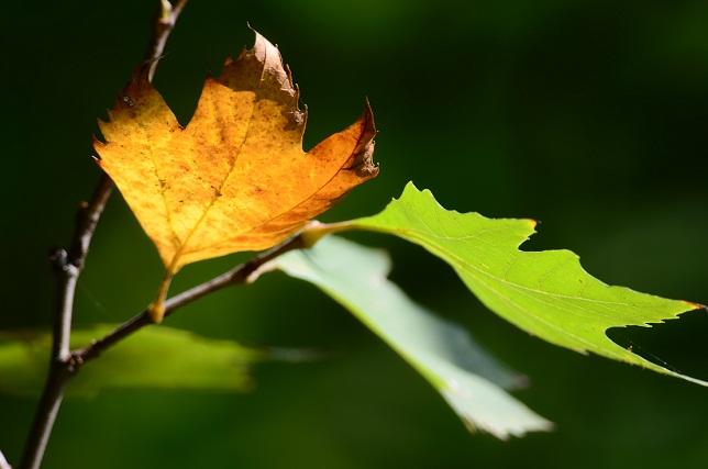 秋の木洩れ日