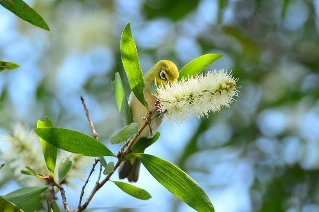 マキバブラシと小鳥(2)