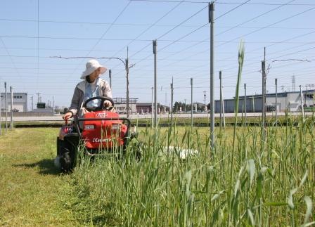 草刈バギー3390