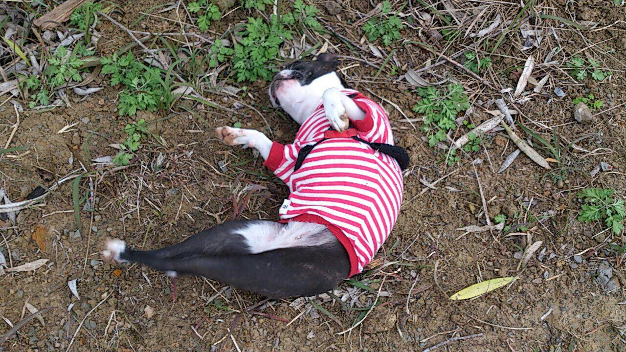 fc2blog_201211281020075e4.jpg