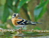小鳥A image