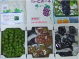 減農薬ブドウ1