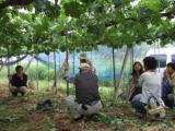 ブドウの自然栽培講習