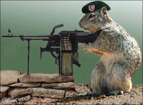 Funny Animals With Gun Pic