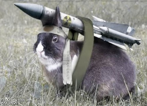 animals-carrying-rocket.jpg