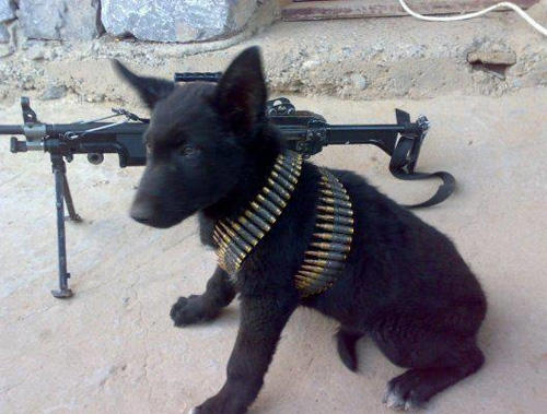 armed-puppy-1-machine-gun.jpg