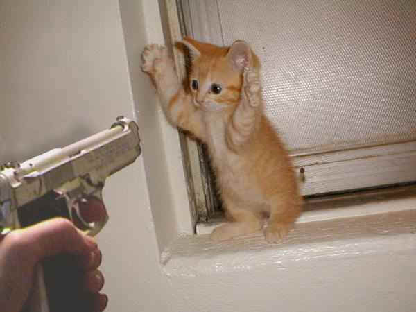 cat_gun.jpg