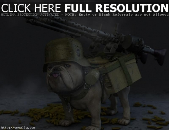 funny-dog-pictures-with-guns.jpg