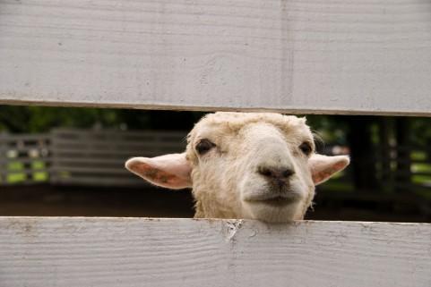 羊a0027_001229