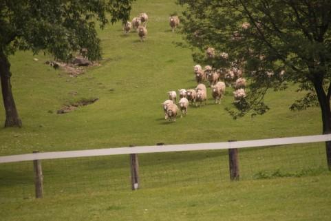 羊a0027_001388