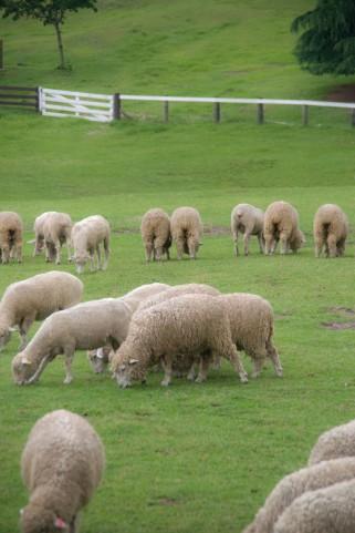 羊a0027_001400