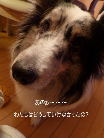 写真00378