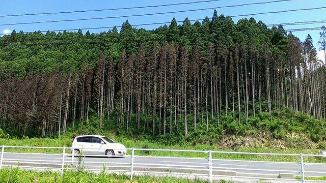 2012南三陸5