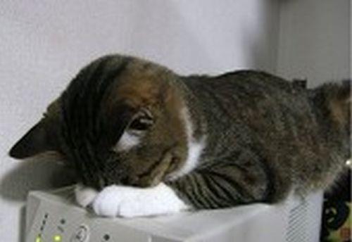 女子高生の脚ってイイよねぇぇぇ 80脚目 [無断転載禁止]©bbspink.comYouTube動画>1本 ->画像>2955枚
