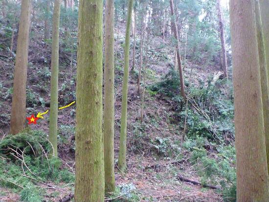 2014.02.20柳に風6