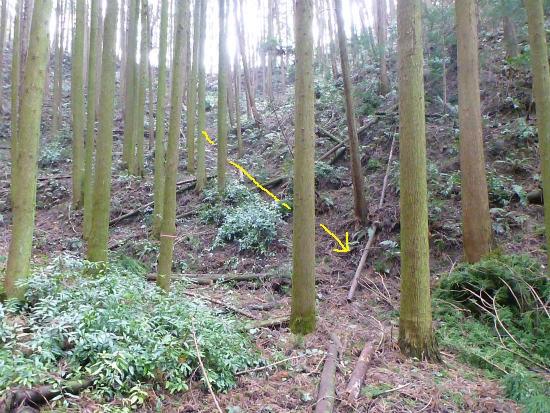 2014.02.20柳に風5