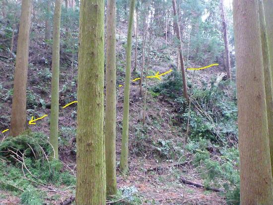 2014.02.20柳に風2