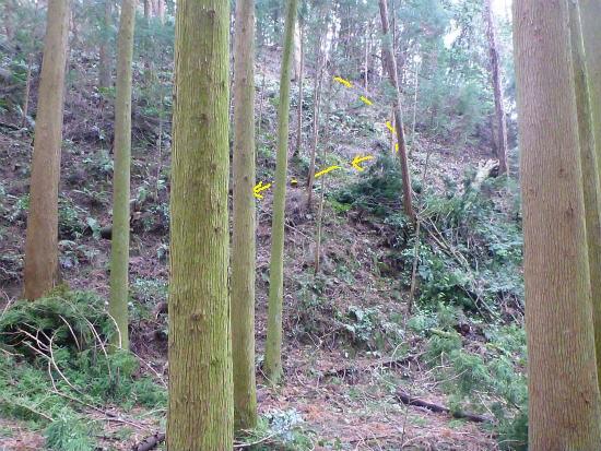 2014.02.20柳に風7
