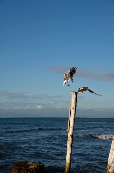 ドリームビーチ1
