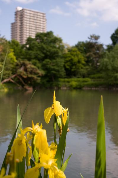 中島菖蒲池