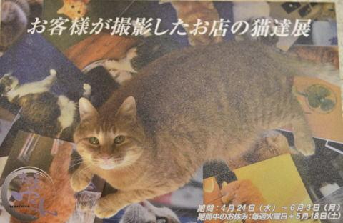 お店の猫達展DM