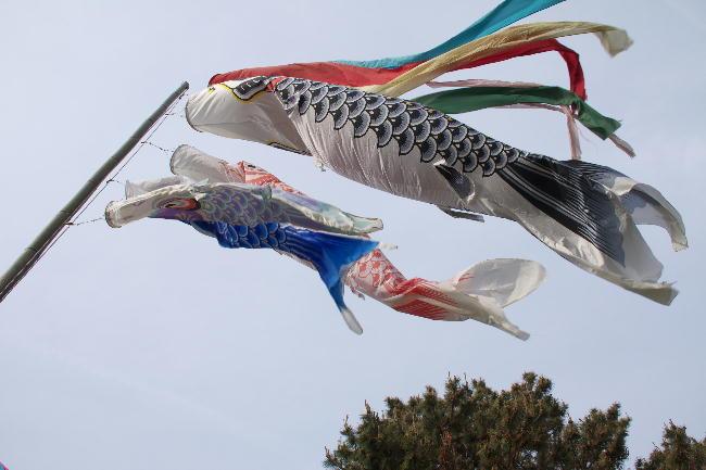 鯉のぼり-1