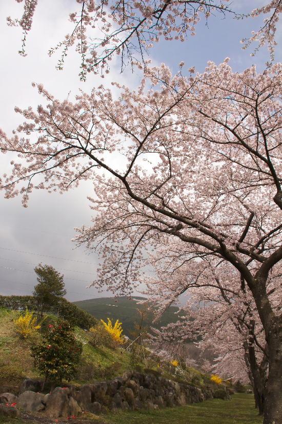 富士霊園-1