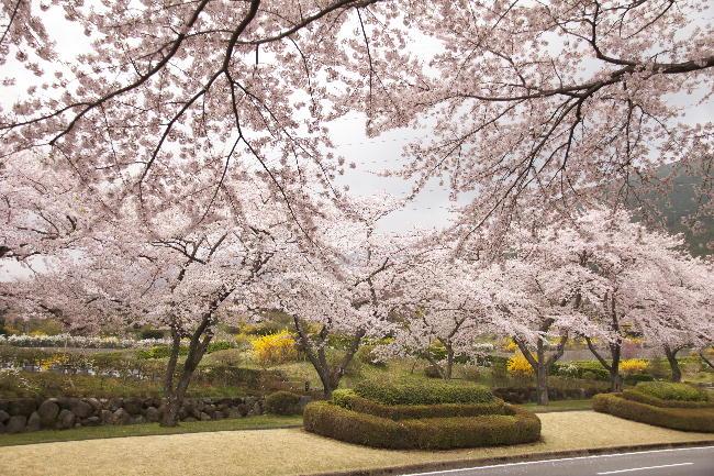 富士霊園-2