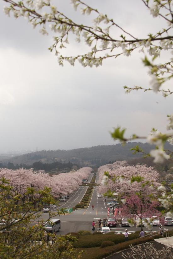 富士霊園-3