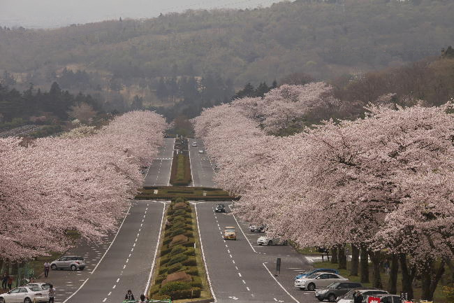 富士霊園-4