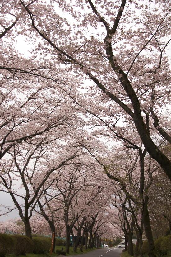 富士霊園-6