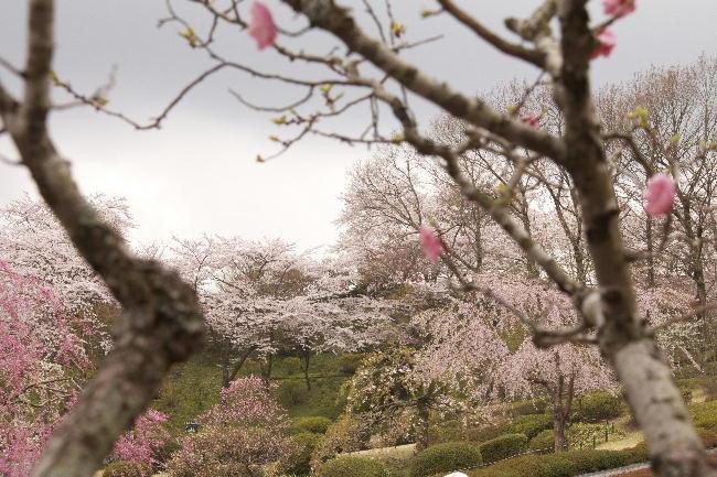 富士霊園-5