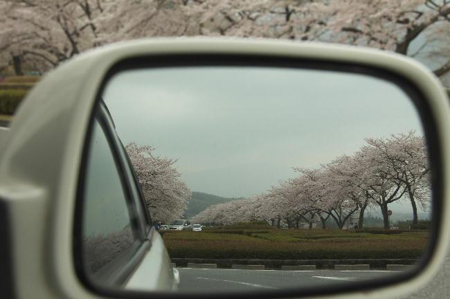 富士霊園-7